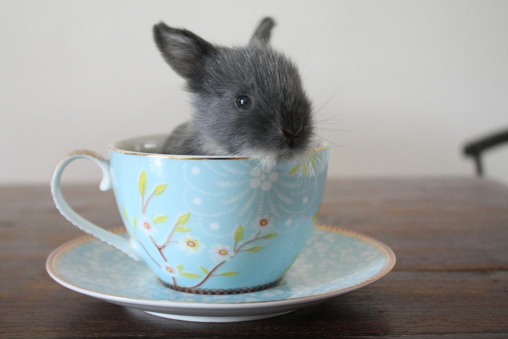thé vert cannelle